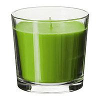 СИНЛИГ Ароматическая свеча в стакане, Яблоко и груша, зеленый