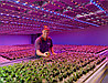 Проектирование и расчет освещения для растений и теплиц