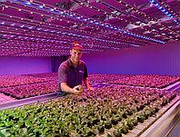 Проектирование и расчет освещения для растений и теплиц, фото 1