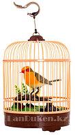 Интерактивная поющая птичка в клетке HL 507 AY (музыкальная игрушка)