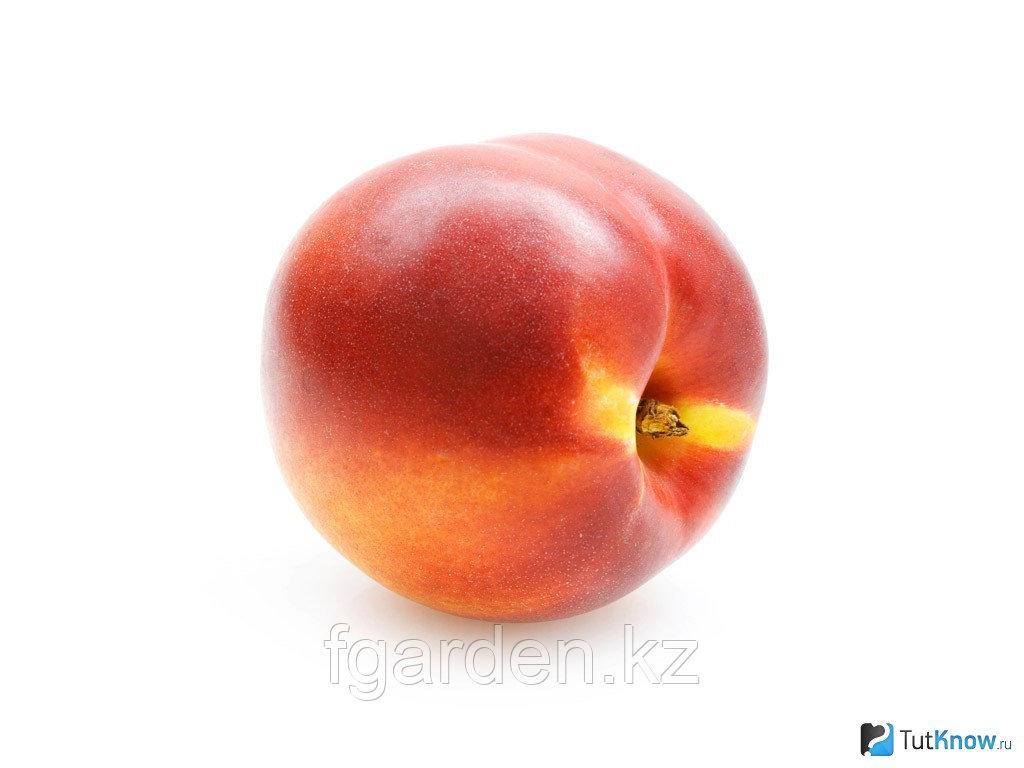 Лысый персик
