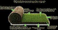 Рулонный газон Укладка Доставка Гарантия качества