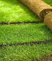 Продажа рулонного газона в Казахстане