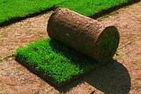 Продажа и укладка рулонного газона в Алматы с доставкой