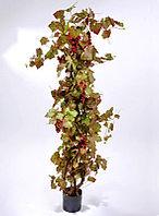 Виноградная лоза (высота-160см)
