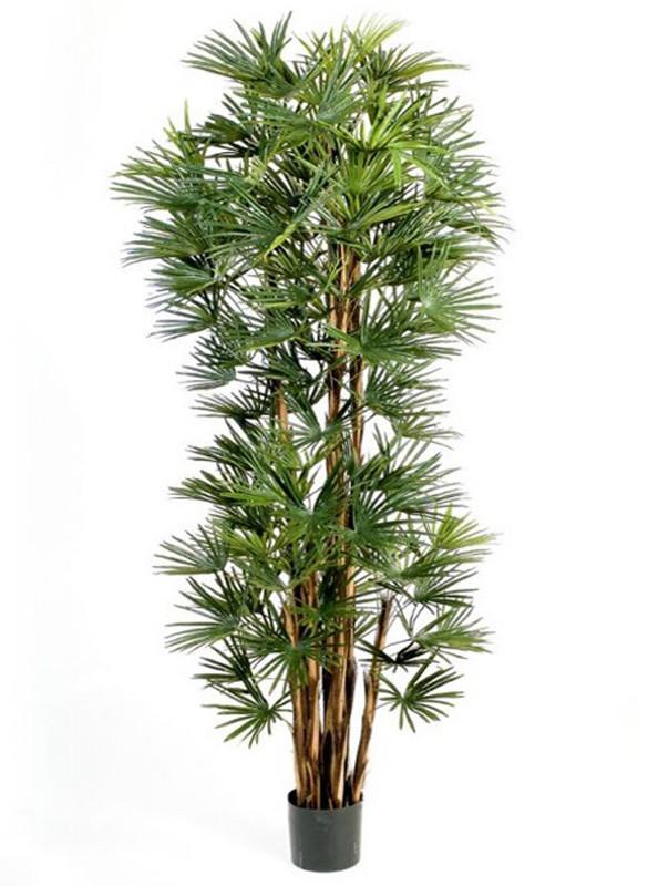 Фан пальма (высота-180см)