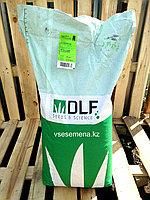 Газонная трава Playground (DLF Trifolium), фото 1