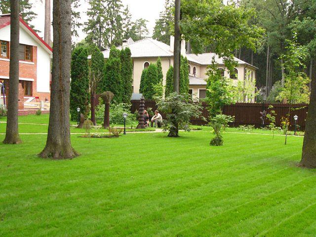 Газонная трава в саду