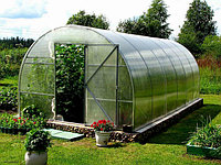 Что можно выращивать в теплице из поликарбоната?