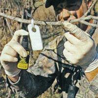 Ароматизированные приманки для охоты