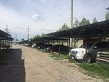 Навесы в Алматы, фото 4
