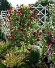 Трельяж (садовая решетка)