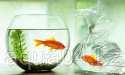 Популярные заблуждения про аквариумы