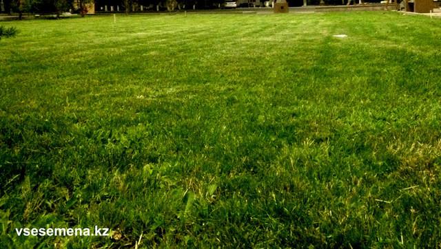 Газонная трава Mixture Sun