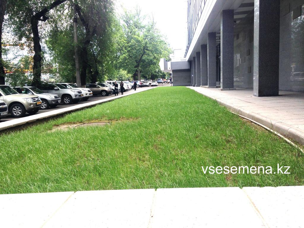 Газонная трава Playground