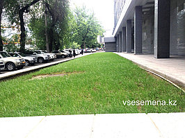 Газонная трава Playground 1