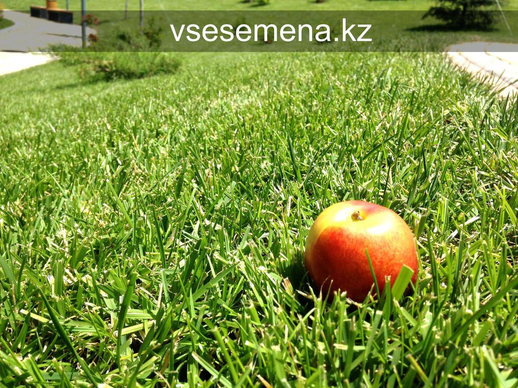 Газонная трава Sport