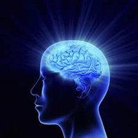 Мозг, нервная система, память