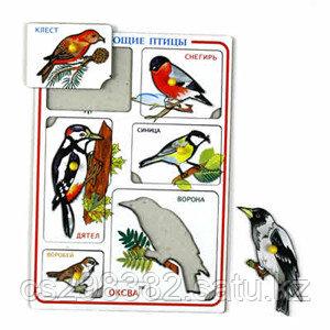 Птицы зимующие худ. рамки-вкладыши (Оксва) 1Э02003 А4
