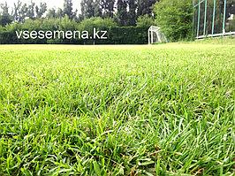 Спортивный газон 1