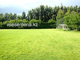 Спортивный газон 2