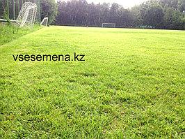Спортивный газон 3