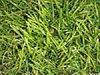 Трава искусственная ландшафтная,«Ева»зеленая