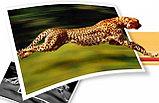 Печать фото большого формата, плакаты, фото 3