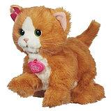 Игривый котенок Дэйзи, фото 2