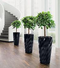 Большие комнатные деревья