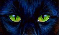 """Зеленая пантера -обертывание """"anti age"""" с голубой глиной, экстрактом женьшеня и родиолы"""