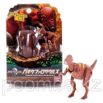 Яйцо-трансформер Пахицефалозавр