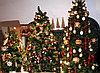 Правила выбора живых елок в Алматы