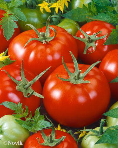 Семена гибридного томата Бабай