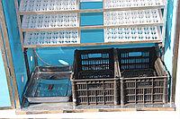 Инкубатор Фермер на 2652 перепелиных яиц
