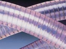 Рукав Bosphorus Турция фирма SEL прозрачный шланг с металлической спиралью