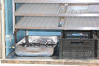 Инкубатор Промышленный на 864 гусиных яиц