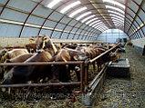 Строительство животноводческих и птицеводческих комплексов, ферм, объектов крестьянских и фермерских хозяйств, фото 3