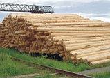 Опоры деревянные пропитанные. Новосибирск, фото 2