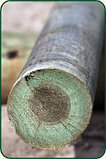 Деревянные ОПОРЫ (столбы) ЛЭП. пасынки , приставки Ж/Б, фото 5