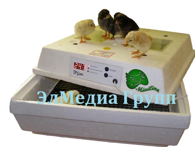 Инкубатор для яиц вместимостью 28 / 45 / 70 / 98 / 100 яиц  на 220 /12 Вольт