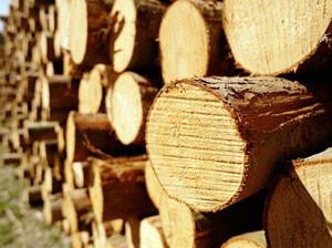Заготовка леса, Тополь, Береза, Осина, Ель, Сосна.