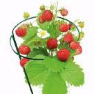 Опоры и подвязки для растений
