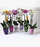 Орхидея микс., фото 3