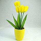 Тюльпан в горшочках!), фото 3