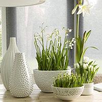 Растения для офиса и дома