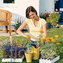 Услуги по уходу за комнатными растениями