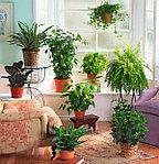 БОЛЬШОЕ поступление комнатных растений на любой вкус и бюджет!!!