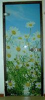 Двери стеклянные раздвижные. Модель А40-1.  Стеклянное полотно, фото 1