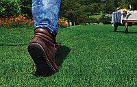 Смесь семян газонной травы Sparring